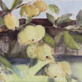"Pirmie āboli ""Gāršās"" | First apples"